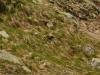 Svišť pod Tatranskou magistrálou (foto zverejnené so súhlasom dotyčného svišťa)