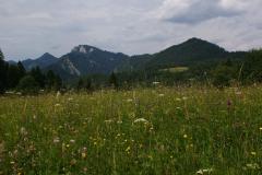 Kvetena Pieninského národného parku