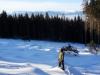 zimny-wolf