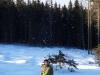 zimny-wolf2