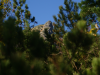 Pohľad cez vždy zelenú kosodrevinu